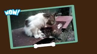 Маня гуляет со своими котятами / Manya walks with her kittens.