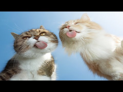SUPER Weird Cats That Will Totally Confuse you – Funny Cat Videos Compilation [FunnyPets]