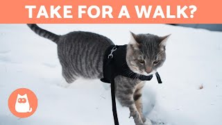 Can I take my CAT for a WALK? 🐈🚶♂️ (Advantages and Disadvantages)