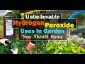 8 Unbelievable Hydrogen Peroxide Uses In Garden You Should Know