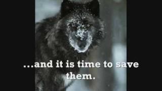 Endangered Gray Wolf