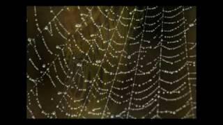 フルートとハープのための協奏曲 第2楽章 アンダンティーノ