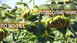 Выращивание подсолнечника по технологии No-Till. ООО Деметра. Крым