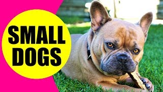 SMALL DOG BREEDS  List of Small Dog Breeds in the World