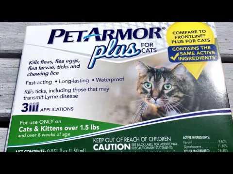 PET ARMOR PLUS FOR CATS REVIEW  Frontline Plus alternative  Tick & Flea Medicine