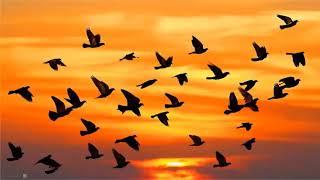 """Познавательное развитие """"Перелетные птицы"""""""