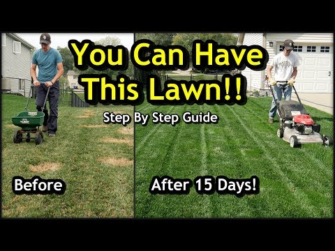 Fix an Ugly Lawn with Overseeding // Complete Step by Step Guide For Beginners