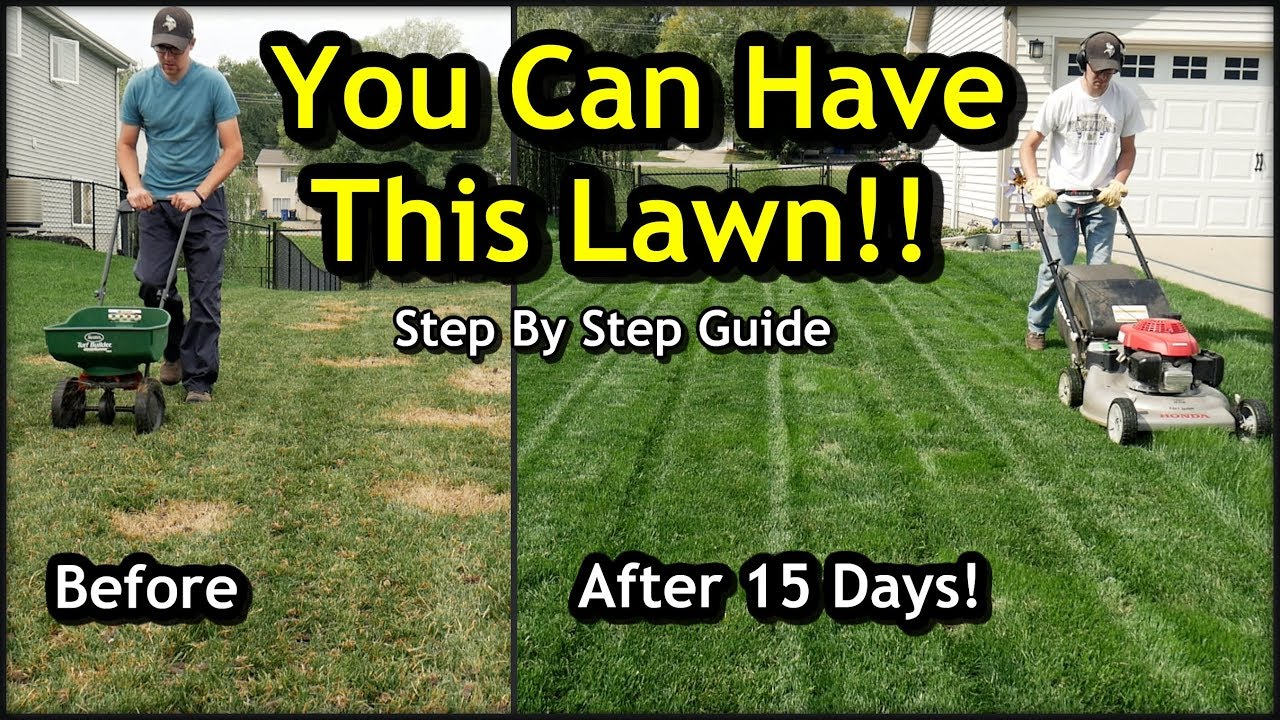 Ugly Lawn with Overseeding // Complete Step by Step Guide For Beginners