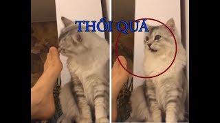 Chó mèo hài hước | chó mèo đánh nhau như võ sĩ boxing - cats tv | tik tok chó mèo
