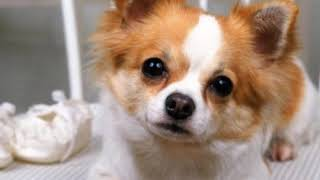 Клип про собак