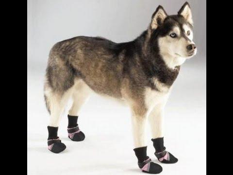 patrones de ropa para perros grandes - YouTube