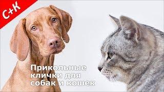 Прикольные, смешные клички (имена) для собак и кошек (мальчиков и девочек)