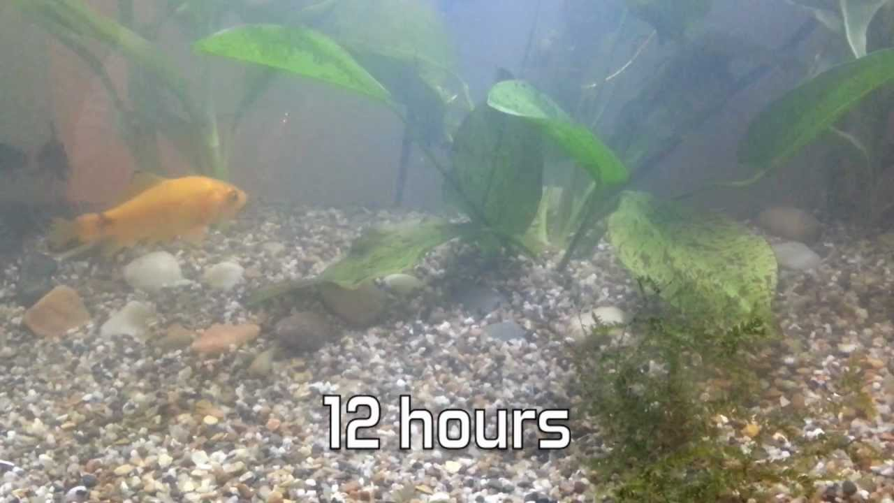 cloudy water in fish tank aquarium over 48 hours youtube