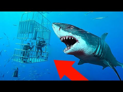 10 Most DANGEROUS Sharks In The World!