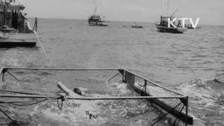 대한뉴스 제 351호-상어를 피하면서 장거리 수영