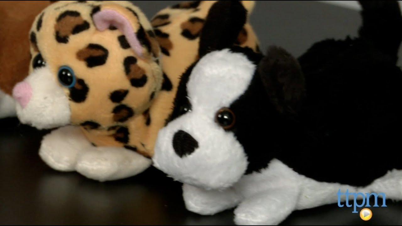 b24e36008 … Cheapest Amazimals Whimsy Walkers Plush White Kitty Cat Kitten with Sound  Price - kabebera