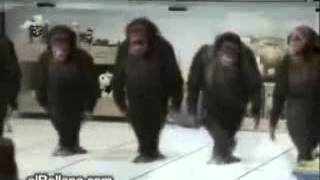 Обезьяны танцуют лезгинку