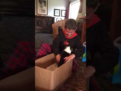 JT - Kid Loves His Gift