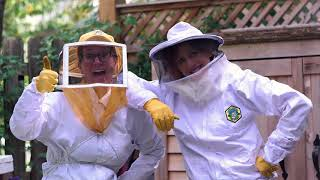 Let's Learn English Level 2 Lesson 13: Save the Bees!
