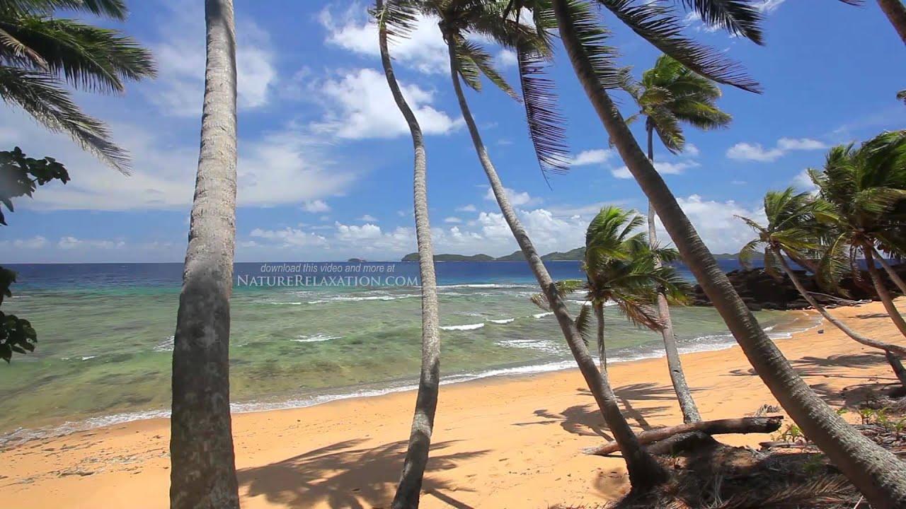 Tropical Island Beach Ambience Sound: Tropical Palms + Beach Scene From Fiji HD Nature