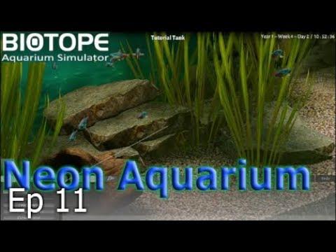 Biotope Aquarium Simulator - Breeding Fish |