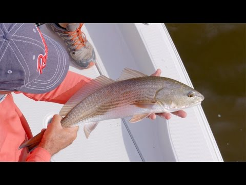 Gypsy Angler - St. Augustine Redfish And Trout
