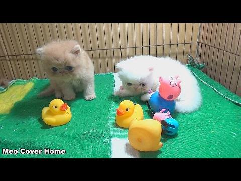 Kittens Playing With Peppa Pig So Cute | Kittens And Peppa Pig 2017 | Meo Cover Home