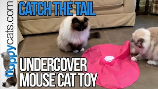 Best Electronic Cat Toy: Blackhole Catch The Tail Cat Toy Product Review