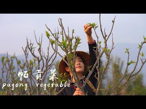 把春天吃进肚子里——帕贡菜【滇西小哥】