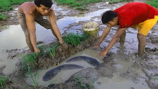 Amazing Fishing Two Men Catch Many Fish In Rice Field Near Village This Month When Dry Water
