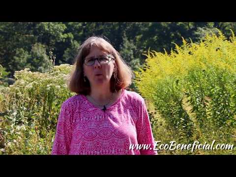 EcoBeneficial Tips:  Fall Flowers In The Pollinator Victory Garden
