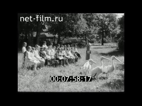1959г. Калининград. зоопарк