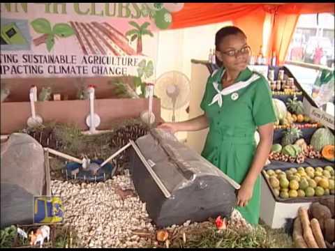 Jamaica's 4-H Clubs: Building Capacity Through Training
