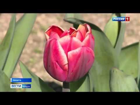 Парад тюльпанов пройдет в Никитском ботаническом саду