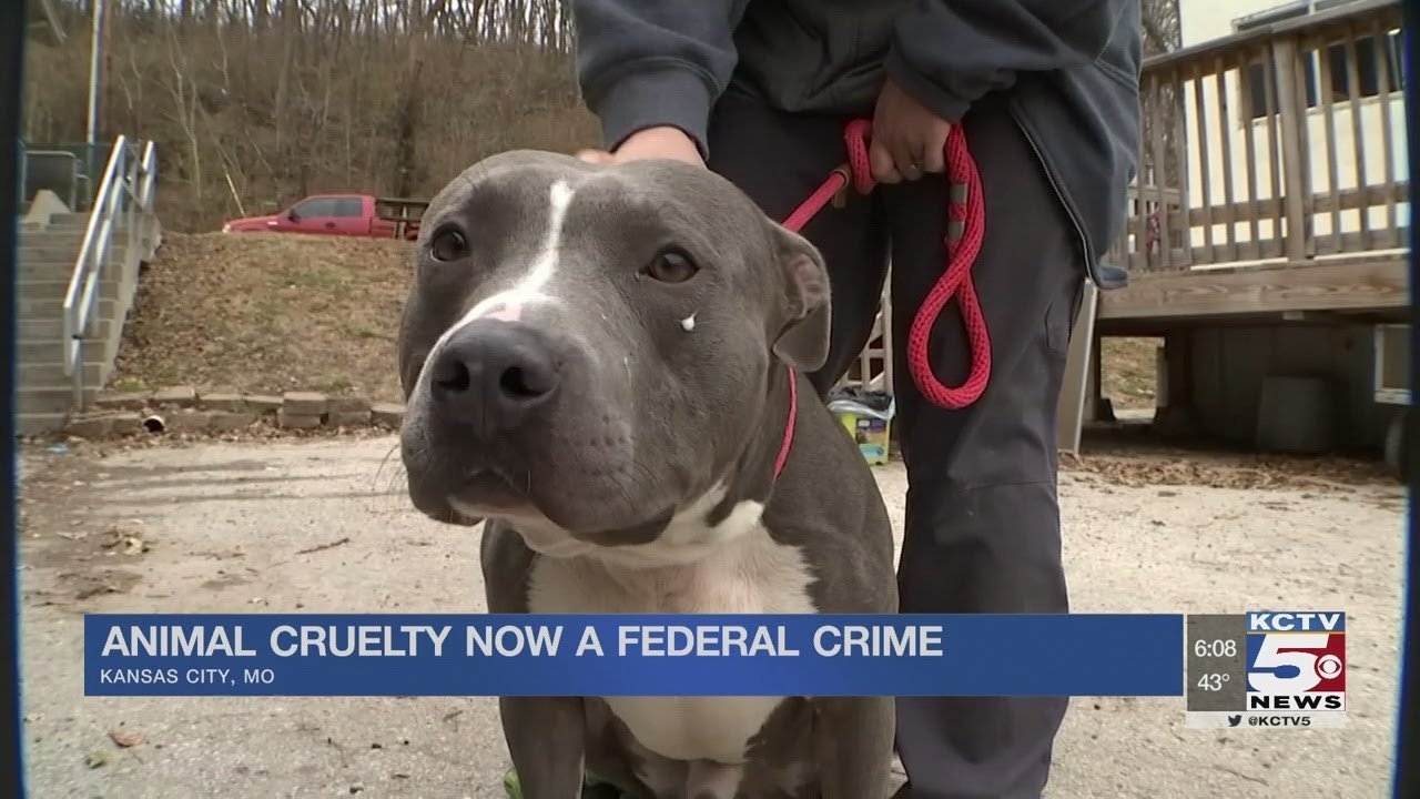 KC Pet Project not sure how new animal cruelty federal law will help local situations