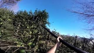 Grubb tree service charlottesville va