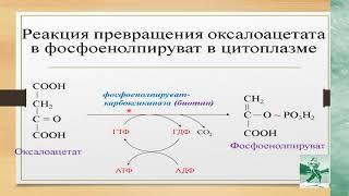 Биохимия Урок 5 Глюконеогенез