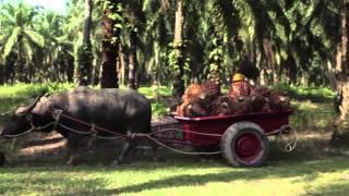 Что такое пальмовое масло?(, 2015-03-10T18:50:32.000Z)