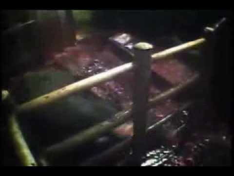 Kürk için hayvanlar katlediliyor