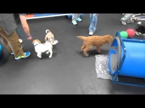 Puppy Preschool Spring 2016!