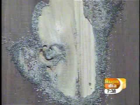 C mo eliminar el comej n o las termitas en su hogar - Como eliminar la polilla de la madera ...