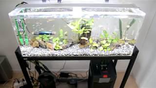 小魚2 thumbnail