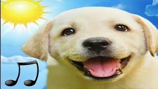 🐶CHIEN MUSIQUE :de Relaxantion pour apaiser et dormir votre chien 2018, la musique préférée