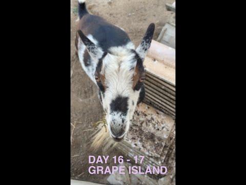 day 16-17 grape island relaxing in santa cruz area