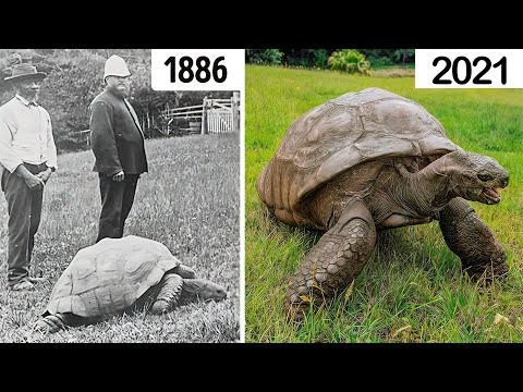 The LONGEST LIVING ANIMALS Of Recent Times