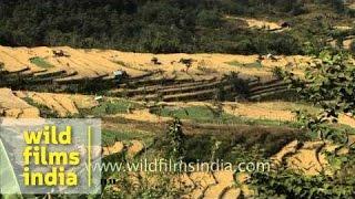 Terrace fields in Khonoma village, Nagaland