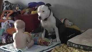 飼い主に捨てられ、心に傷を負った犬。小さな男の子に出会うと、愛情を...