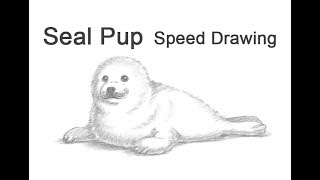 Harp Seal Pup Time-lapse / Speed Drawing