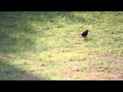 Alle Vögel sind schon da (Deutsches Volkslied)