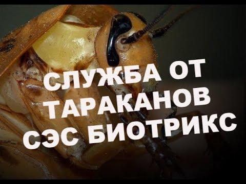 Как вызвать службу травли тараканов в своей квартире?